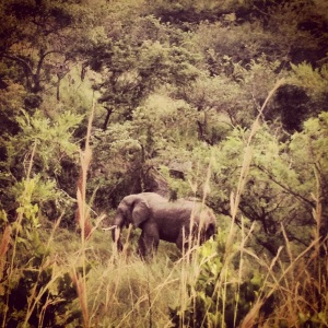 We had driven off the track to see elephants sunning on a high cliff above us. This bull appeared from nowhere right in front of us.