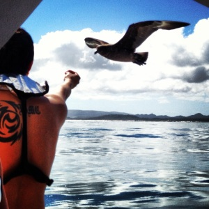 the birds would fly parallel to the boat and scavenge for chum right out of your hand